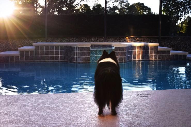 Ace watching sunset 101417