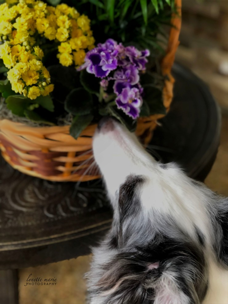 {Deuce} Stopping to Smell the Flowers
